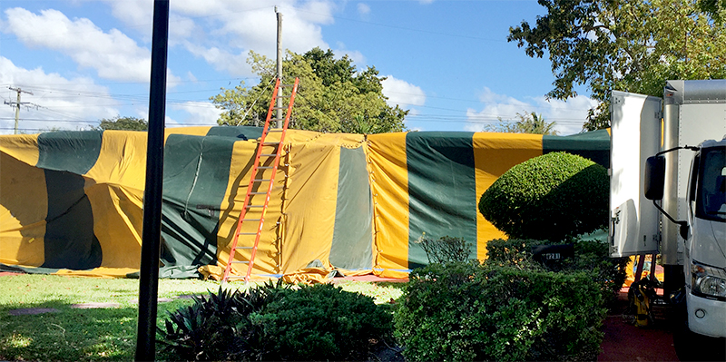 High quality termite pest control with tents We protect your roof and house from the corners. : tent fumigation miami - memphite.com