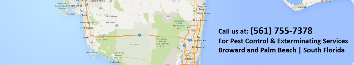 Pest Control Service In South Florida Green Palm Pc