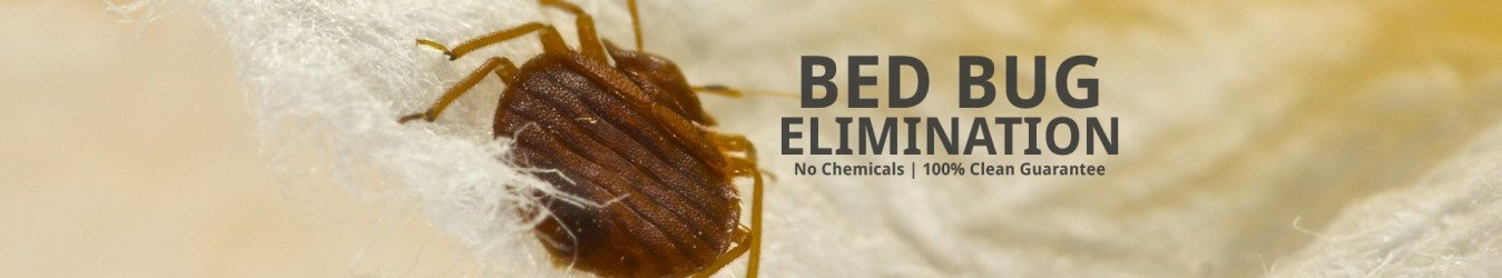 Bed Bug in a bed with a sign that says bed bug elimination