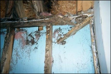 How to fix Termite Damage in homes